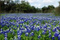 San Antonio, TX in Alamo Ranch